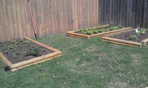 Garden - April 6th